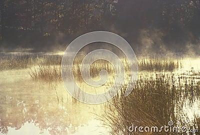 Autumn Pond in Mist