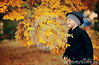 Autumn portrait of the boy
