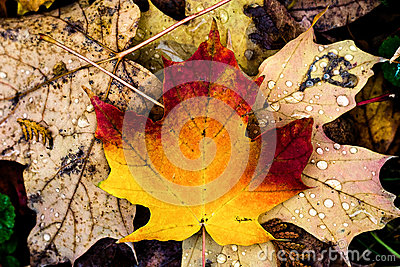 Autumn presence in leaves