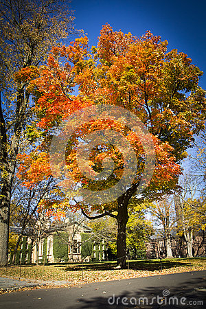 Autumn at Princeton University