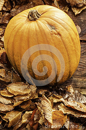 Autumn Pumpkin