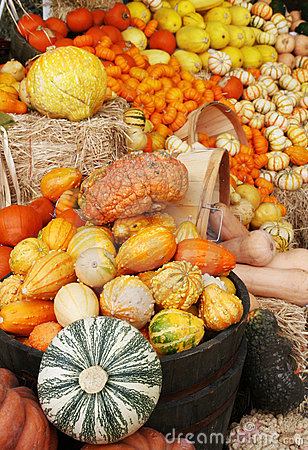 Autumn pumpkins and gourds display
