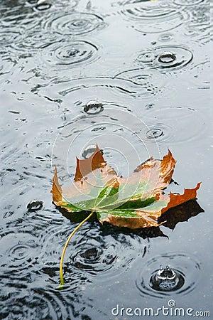 Free Autumn Rain Royalty Free Stock Images - 236689