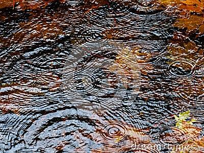 Autumn rain puddle