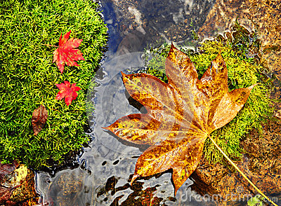 Autumn, red and yellow leaves on moss srones, wild river