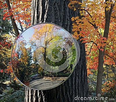 Autumn Reflection 2