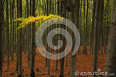 Autumn reminiscence