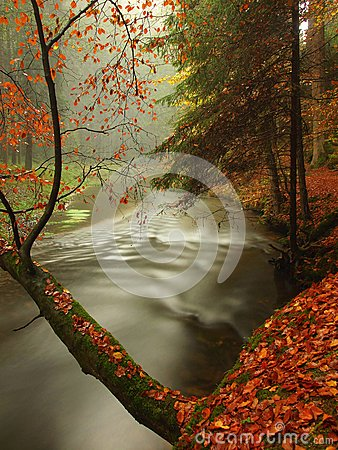 Free Autumn River In Forest. Bended Tree Above Water Level Stock Image - 46107551