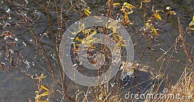 Autumn River Las hojas en el agua metrajes