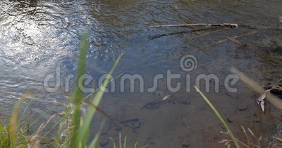 Autumn River Las hojas en el agua almacen de video