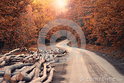 Autumn Road and Harvested Trees