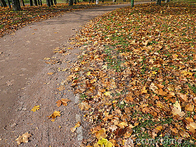 Autumn road in city park