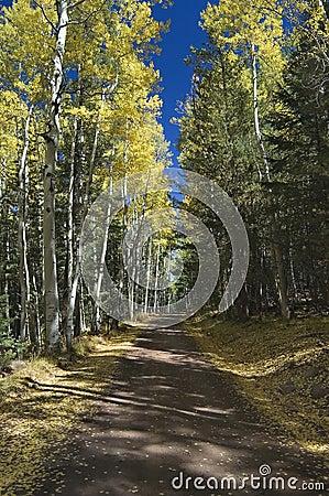 Free Autumn Road Through Quaking Aspens Stock Images - 599694