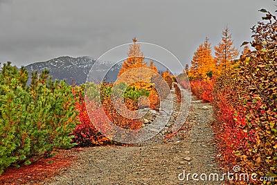 Autumn. Road to mountains