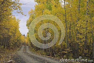 Autumn Road, Uinta Mountains 272-3-14