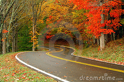 Autumn Roads