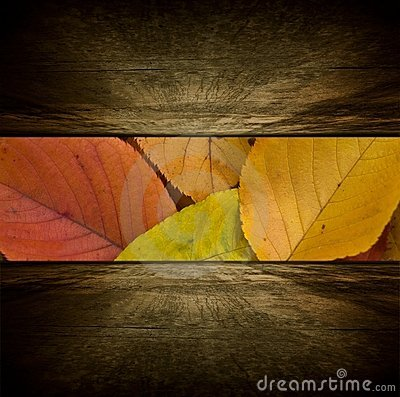Free Autumn Room Royalty Free Stock Image - 10814696