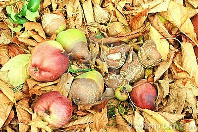 Autumn rotten fruits