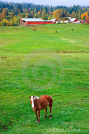 Autumn rural scenery, horse farm, Washington