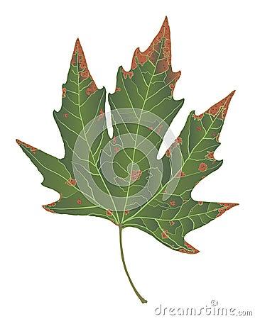 Autumn rusty leaf