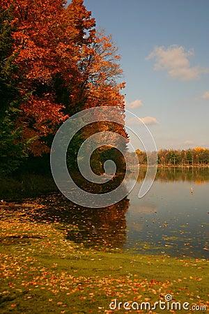 Autumn s Colors