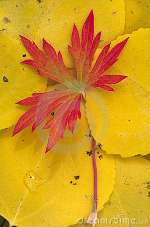 Free Autumn S End Royalty Free Stock Images - 243059