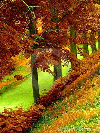 Autumn s forest