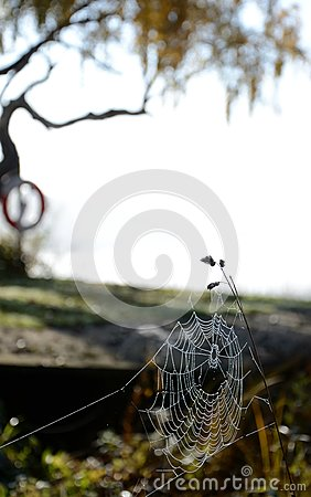 Autumn s spiderweb