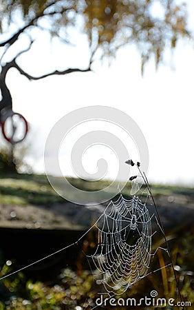 Autumn s spiderweb