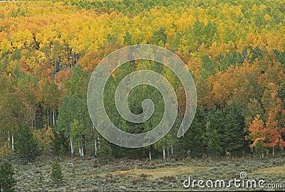 Autumn scene 272-3-1