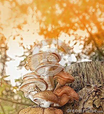 Autumn scene background