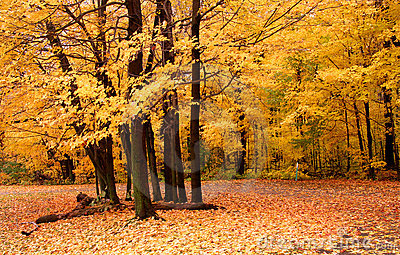 Autumn Scene In A Park