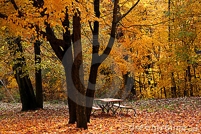 Autumn Scene In A Park