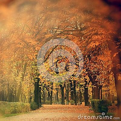 Free Autumn Scenery In Park Stock Photos - 35310673