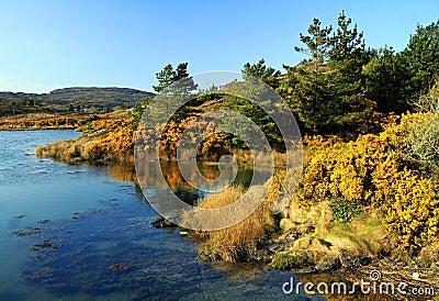 Autumn scenery in Ireland