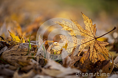 Autumn season leaf