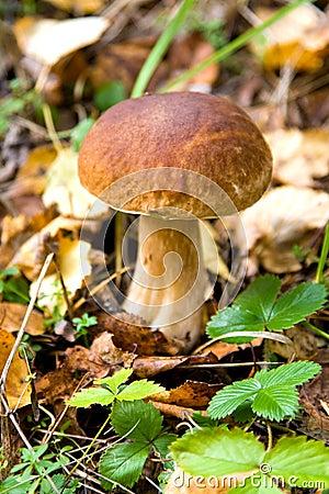 Autumn season, mushroom