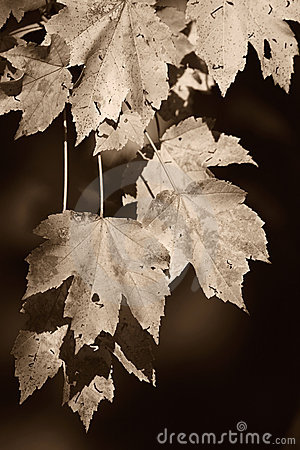 Autumn in sepia