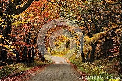 Autumn shades, Gisburn forest, Lancashire