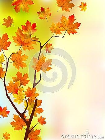 Autumn silk floral leaves.