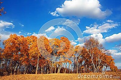 The autumn sky