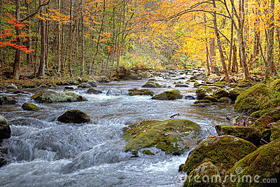 Autumn Smoky Mountain stream