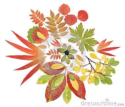 Autumn still life from sheet