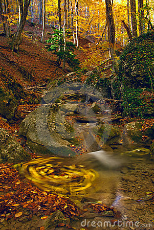 Autumn stream in wood