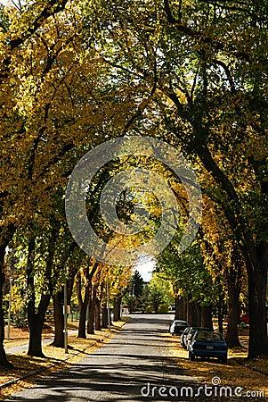 Autumn street view in edmonton