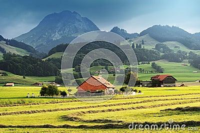 Autumn sunny field