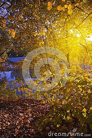 Autumn sunny tree