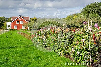 Autumn in Swedish garden