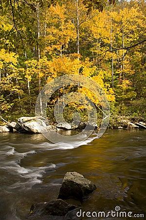Autumn, Tellico River, Cherokee NF