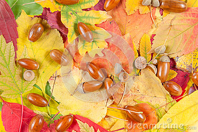 Autumn texture with acorn